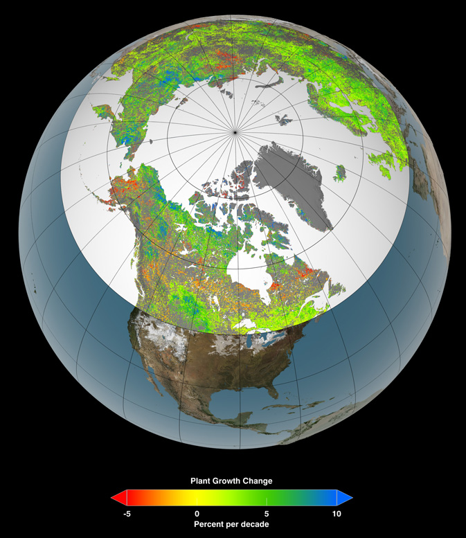 Of the 10 million square miles (26 million square kilometers) of northern vegetated lands, 34 to 41 percent showed increases in plant growth (green and blue), 3 to 5 percent showed decreases in plant growth (orange and red), and 51 to 62 percent showed no changes (yellow) over the past 30 years. Satellite data in this visualization are from the AVHRR and MODIS instruments, which contribute to a vegetation index that allows researchers to track changes in plant growth over large areas.Credit: NASA's Goddard Space Flight Center Scientific Visualization Studio