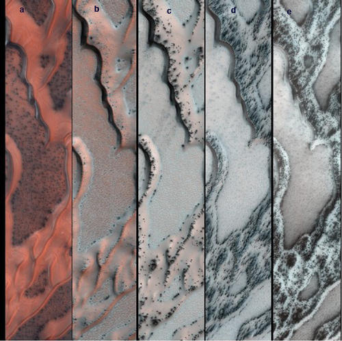 This series of false-color pictures of sand dunes in the north polar region of Mars. The area covered in each of the five panels is about 0.8 mile (1.3 kilometers) wide. The progression begins at left (Panel A) in early spring, when the ground is covered by a seasonal layer of carbon dioxide ice (dry ice) about 2 feet thick. As spring progresses the ice cracks (Panel B), releasing dark sand from the dune below. When pressurized gas trapped below the ice layer is released, it carries along sand and dust to the top of the ice layer, where it is dropped in fan-shaped deposits downhill and downwind (panels C and D). The final panel shows more and more of the dark dunes as the overlying layer of seasonal ice evaporates back into the atmosphere. Image Credit: NASA/JPL-Caltech/Univ. of Arizona