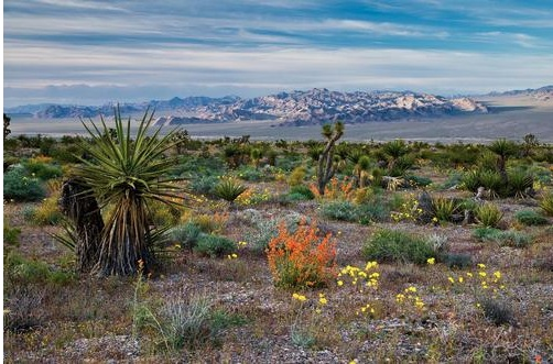 Photo by Michael Balen, courtesy of Bureau of Land Management