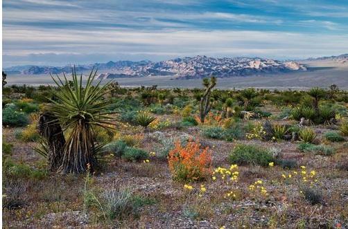 Photo by Michael Balen, courtesy of Bureau of Land Management